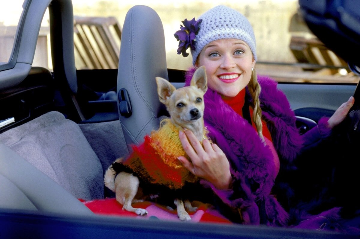 Reese Witherspoon and her Chihuahua named Bruiser Woods in Legally Blonde