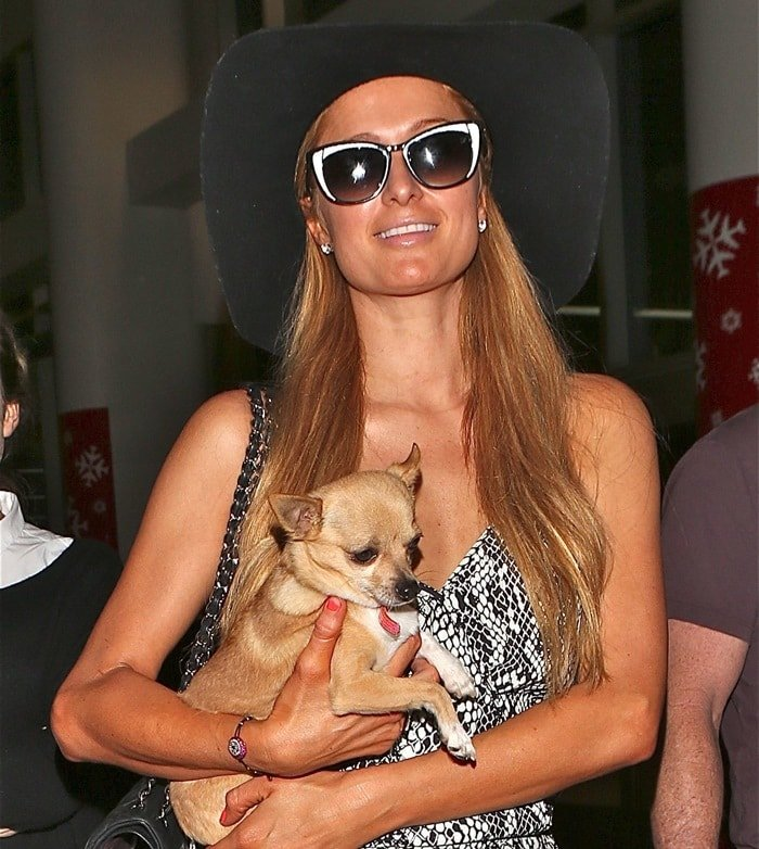 Paris Hilton carrying her Chihuahua, Peter Pan