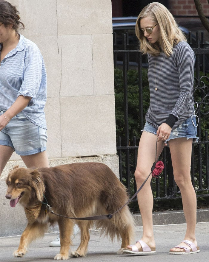 Amanda Seyfried walks her dog Finn in New York on August 27, 2015