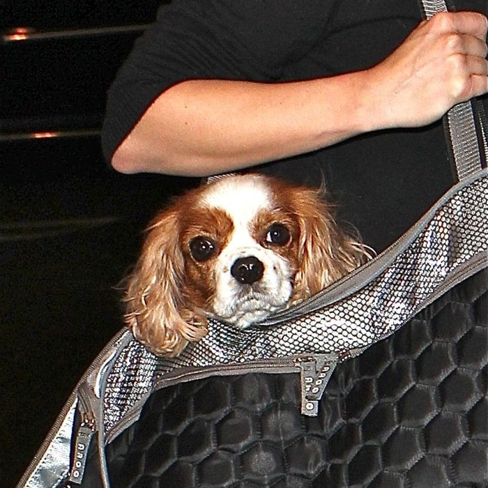 Julianne Hough arrives at Los Angeles International (LAX) airport with one of her Cavalier King Charles Spaniel dogs
