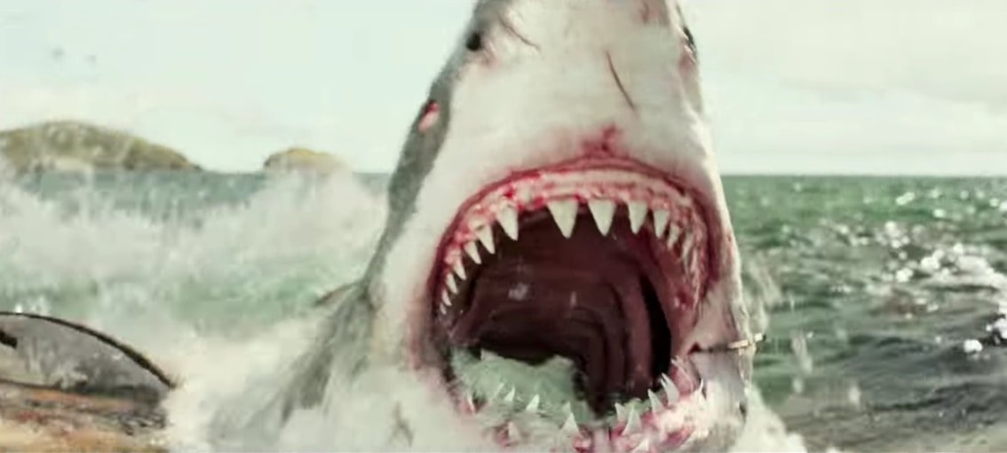 The shark in The Shallows was made entirely through computer-generated imagery