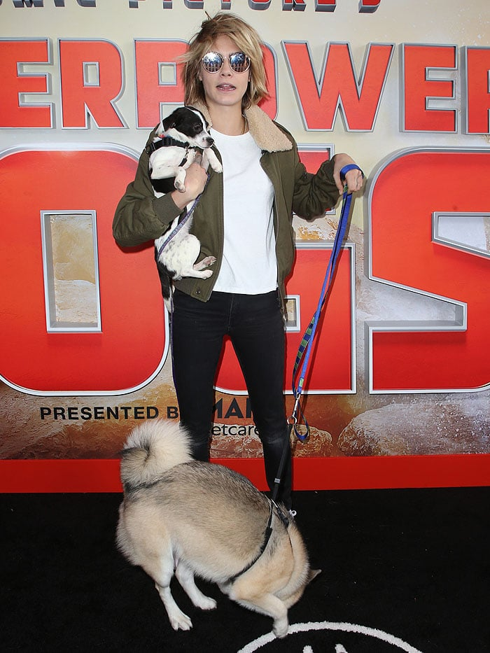 Cara Delevingne trying to handle dogs in a Saint Laurent shearling-collar bomber jacket, black skinny jeans, and PUMA 'Cali' sneakers